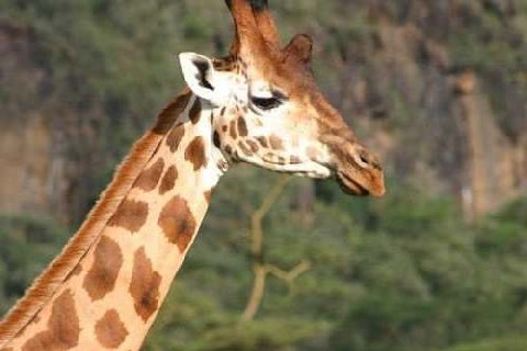 What To Do In Tarangire National Park