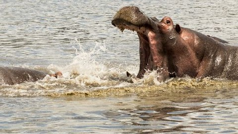 Photography on Selous Adventure – Guest Article