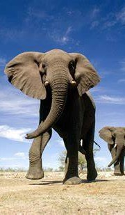 Tanzania: Get Up Close With Nature and the Wild
